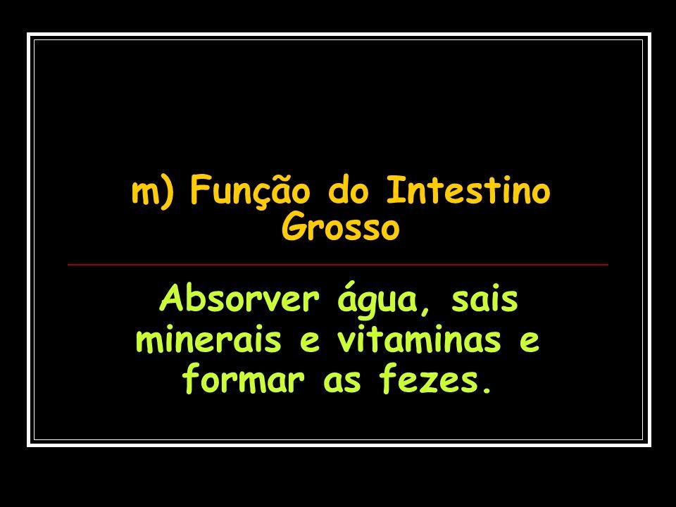 m) Função do Intestino Grosso
