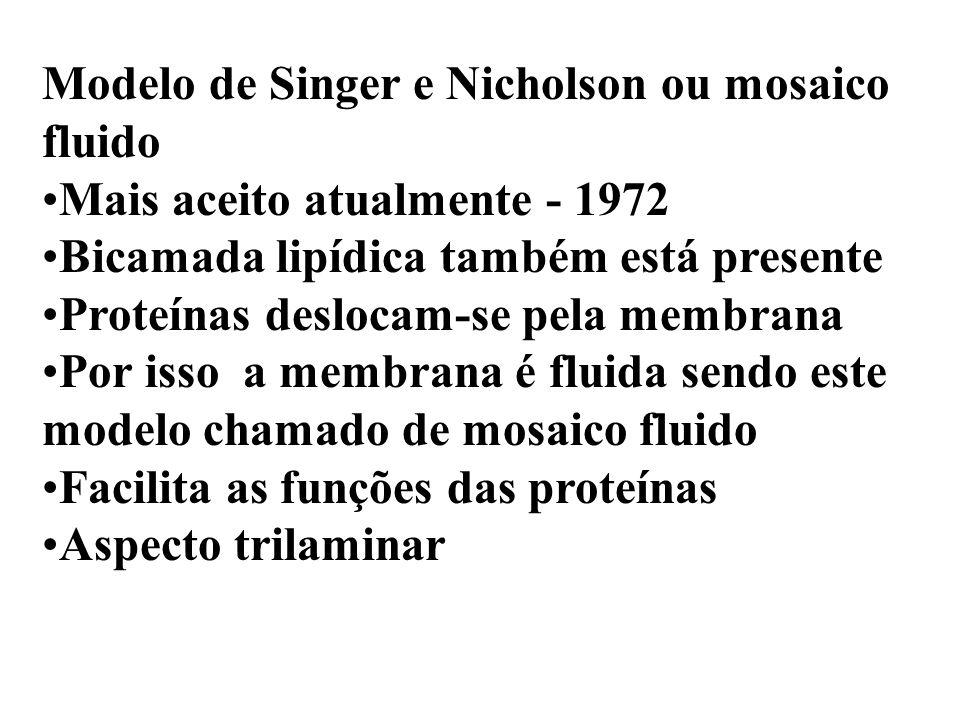 Modelo de Singer e Nicholson ou mosaico fluido