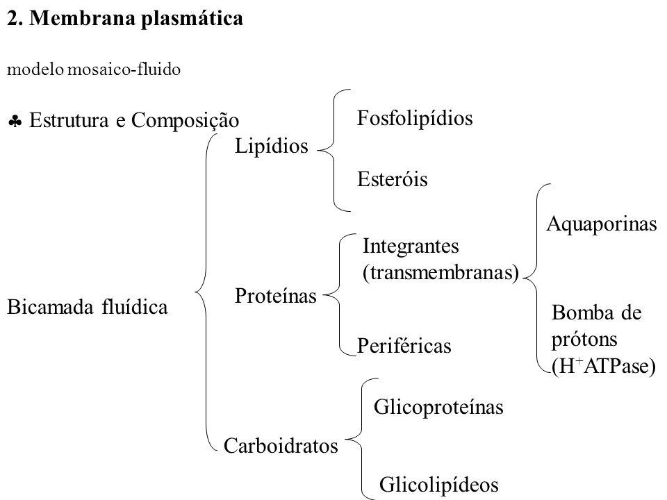  Estrutura e Composição
