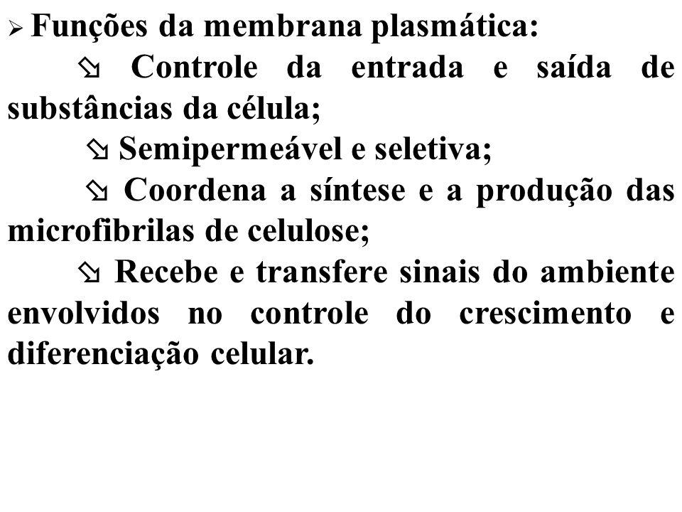  Controle da entrada e saída de substâncias da célula;