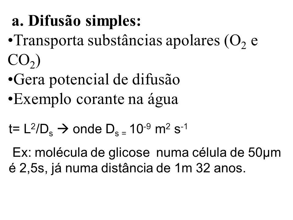 Transporta substâncias apolares (O2 e CO2) Gera potencial de difusão