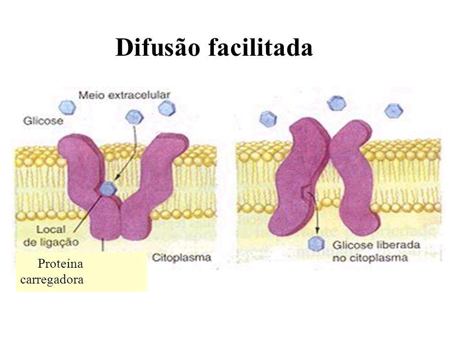 Difusão facilitada Proteína carregadora