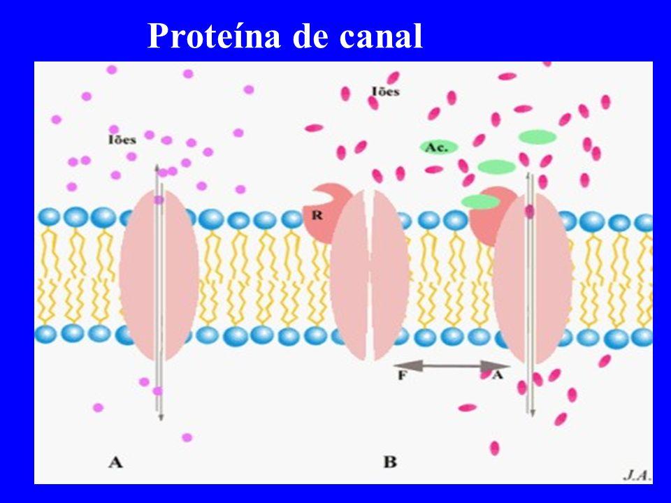 Proteína de canal