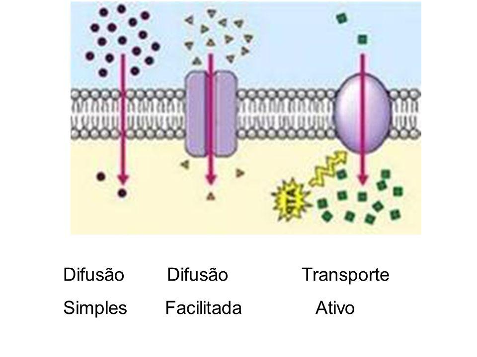 Difusão Difusão Transporte