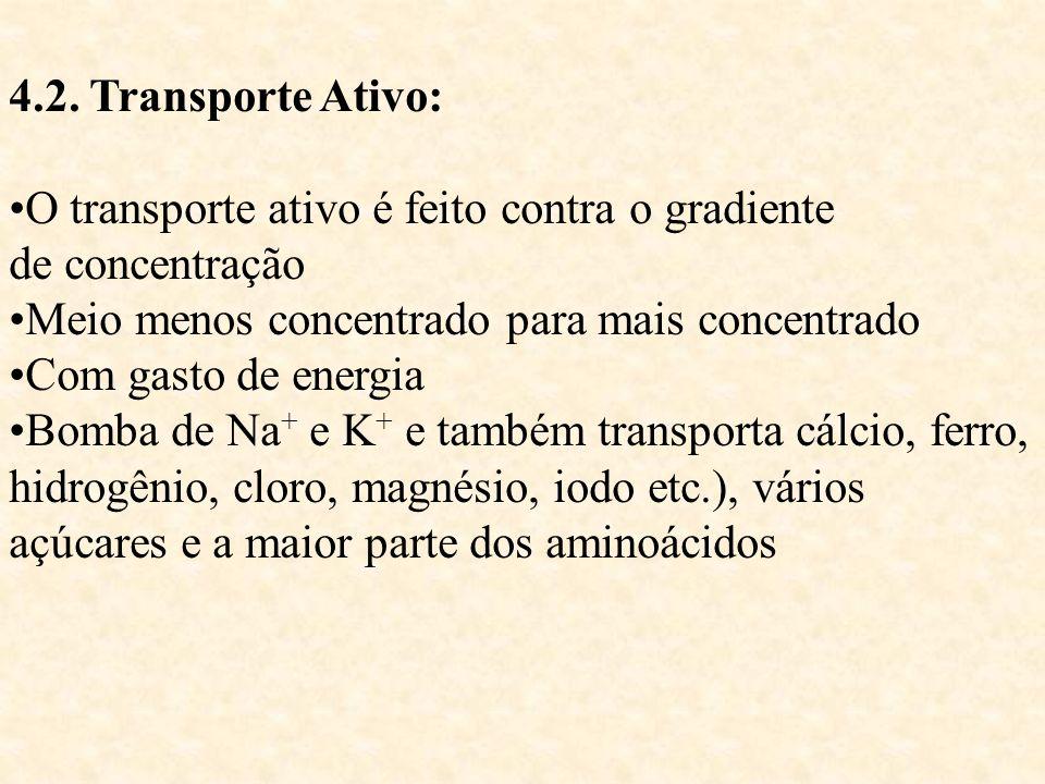 4.2. Transporte Ativo: O transporte ativo é feito contra o gradiente. de concentração. Meio menos concentrado para mais concentrado.