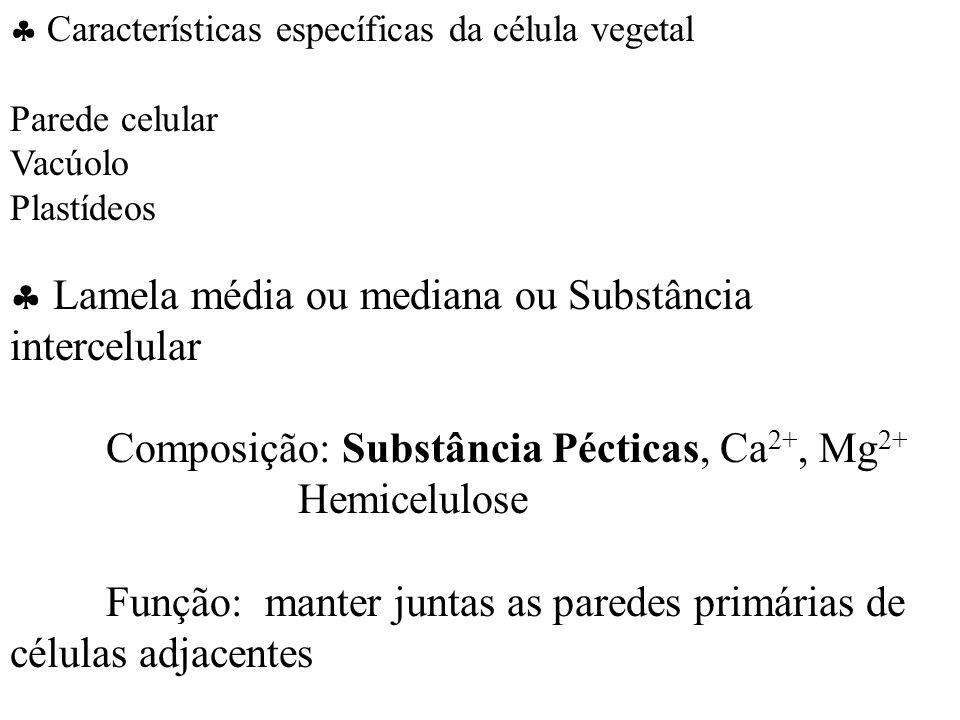  Lamela média ou mediana ou Substância intercelular