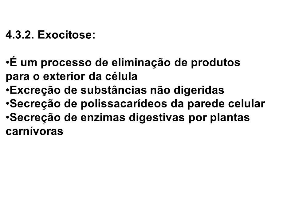 4.3.2. Exocitose: É um processo de eliminação de produtos. para o exterior da célula. Excreção de substâncias não digeridas.