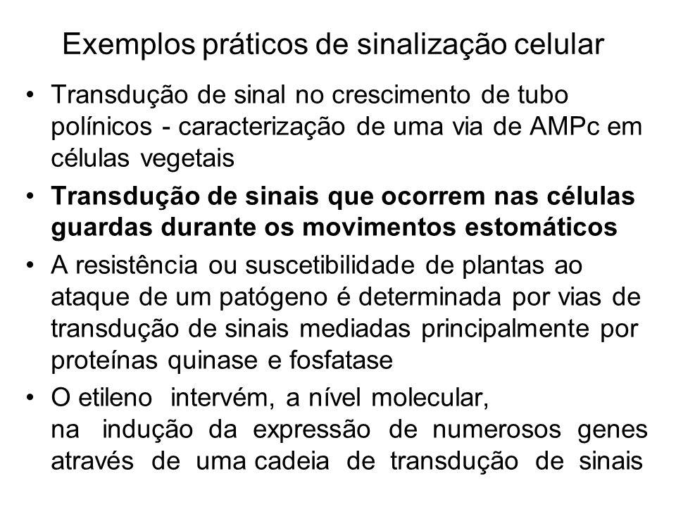 Exemplos práticos de sinalização celular