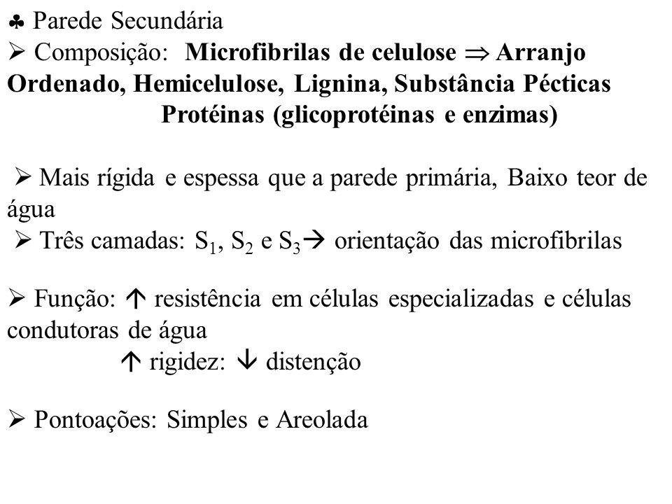  Parede Secundária  Composição: Microfibrilas de celulose  Arranjo Ordenado, Hemicelulose, Lignina, Substância Pécticas.