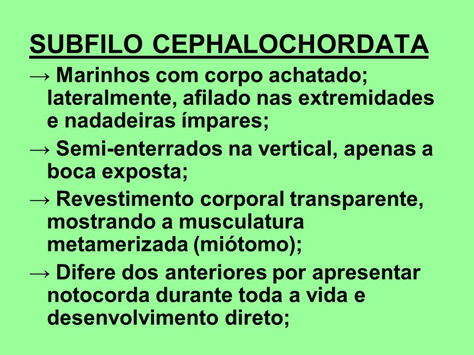 SUBFILO CEPHALOCHORDATA