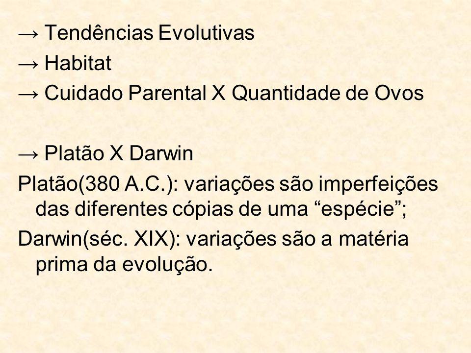 → Tendências Evolutivas