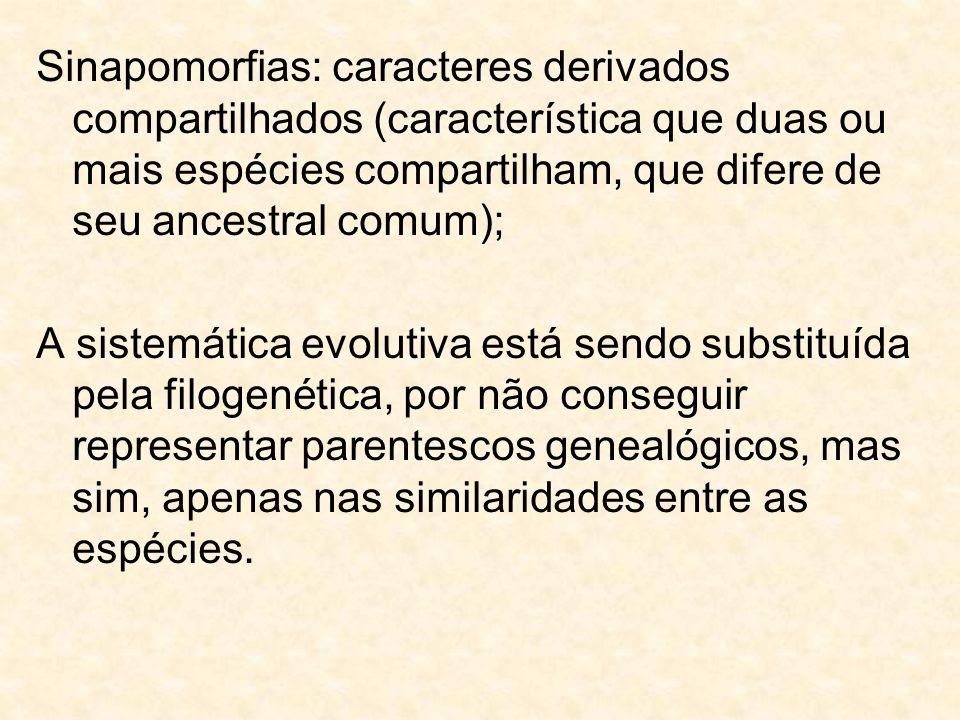 Sinapomorfias: caracteres derivados compartilhados (característica que duas ou mais espécies compartilham, que difere de seu ancestral comum);
