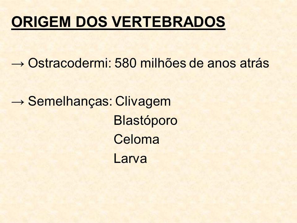ORIGEM DOS VERTEBRADOS