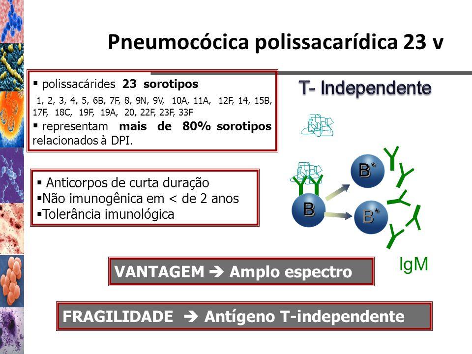 Pneumocócica polissacarídica 23 v