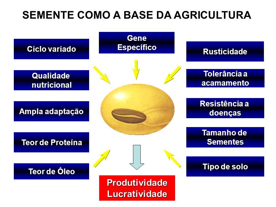 SEMENTE COMO A BASE DA AGRICULTURA