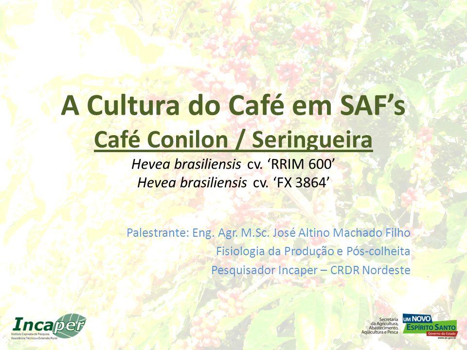 A Cultura do Café em SAF's Café Conilon / Seringueira Hevea brasiliensis cv. 'RRIM 600' Hevea brasiliensis cv. 'FX 3864'