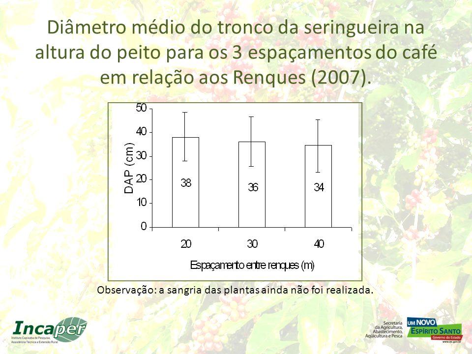 Diâmetro médio do tronco da seringueira na altura do peito para os 3 espaçamentos do café em relação aos Renques (2007).