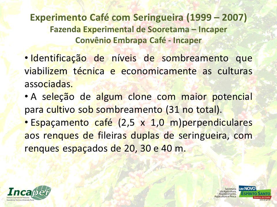 Experimento Café com Seringueira (1999 – 2007) Fazenda Experimental de Sooretama – Incaper Convênio Embrapa Café - Incaper