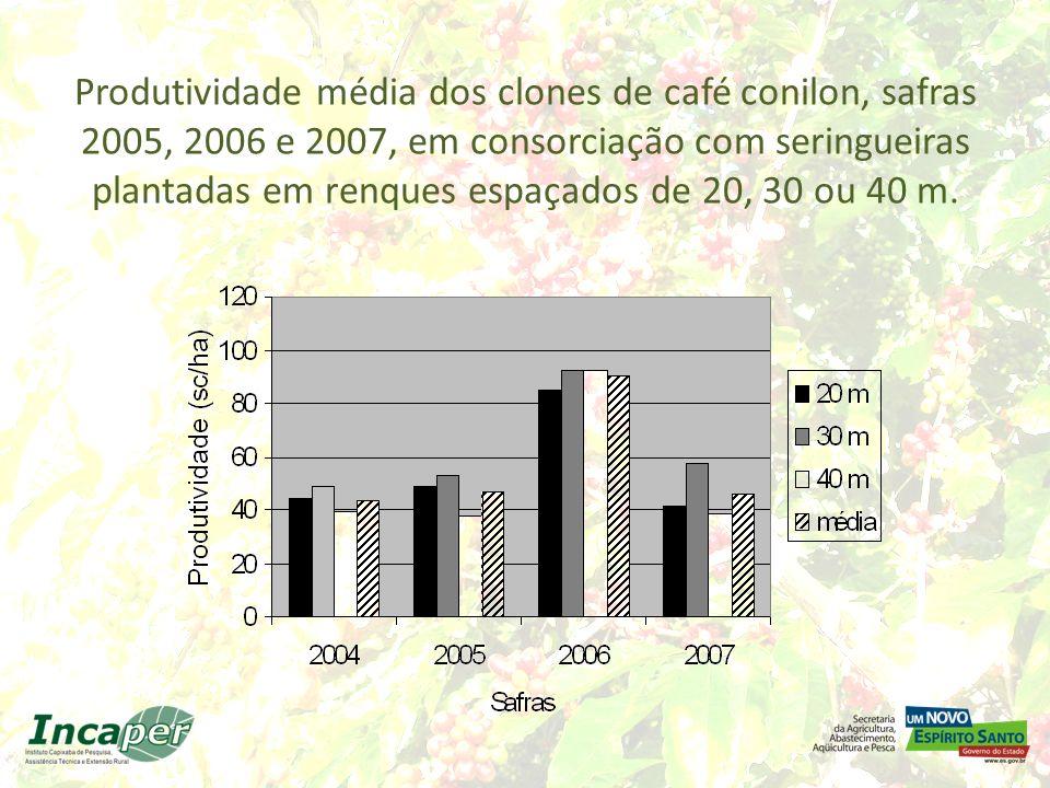 Produtividade média dos clones de café conilon, safras 2005, 2006 e 2007, em consorciação com seringueiras plantadas em renques espaçados de 20, 30 ou 40 m.