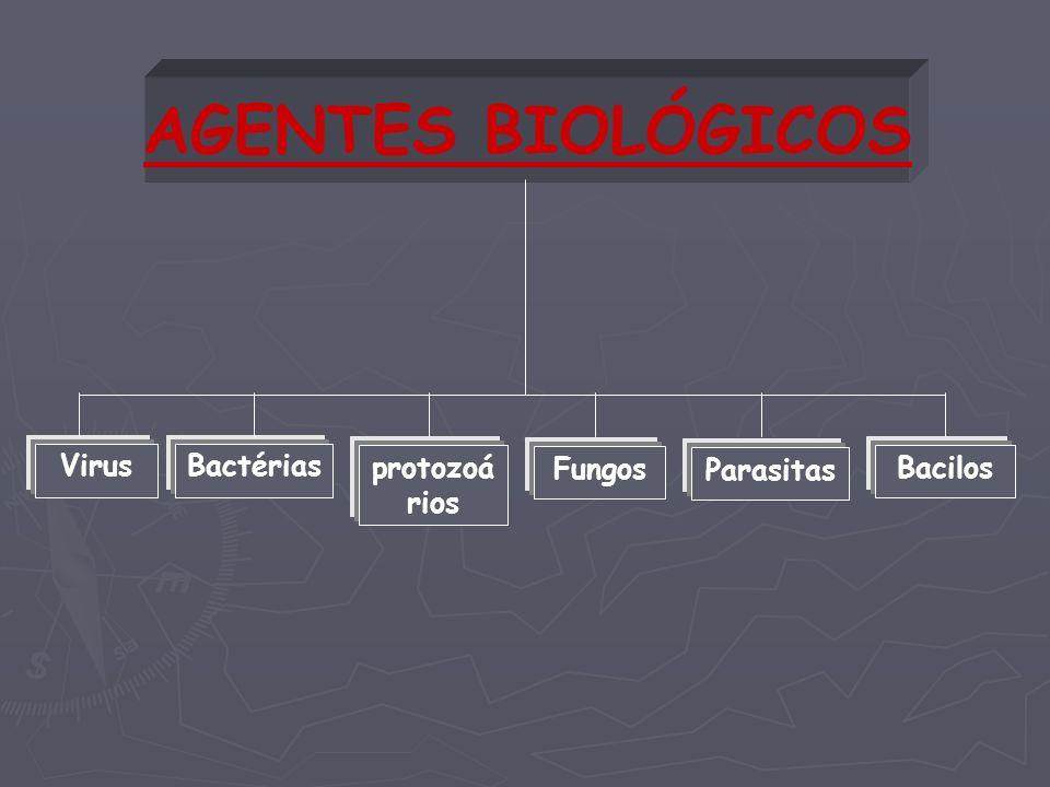 AGENTES BIOLÓGICOS Virus Bactérias protozoários Fungos Parasitas