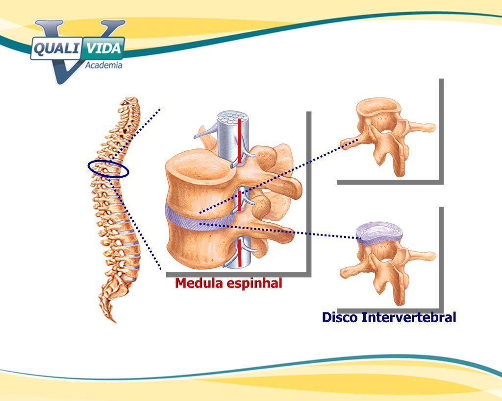 Medula espinhal Disco Intervertebral