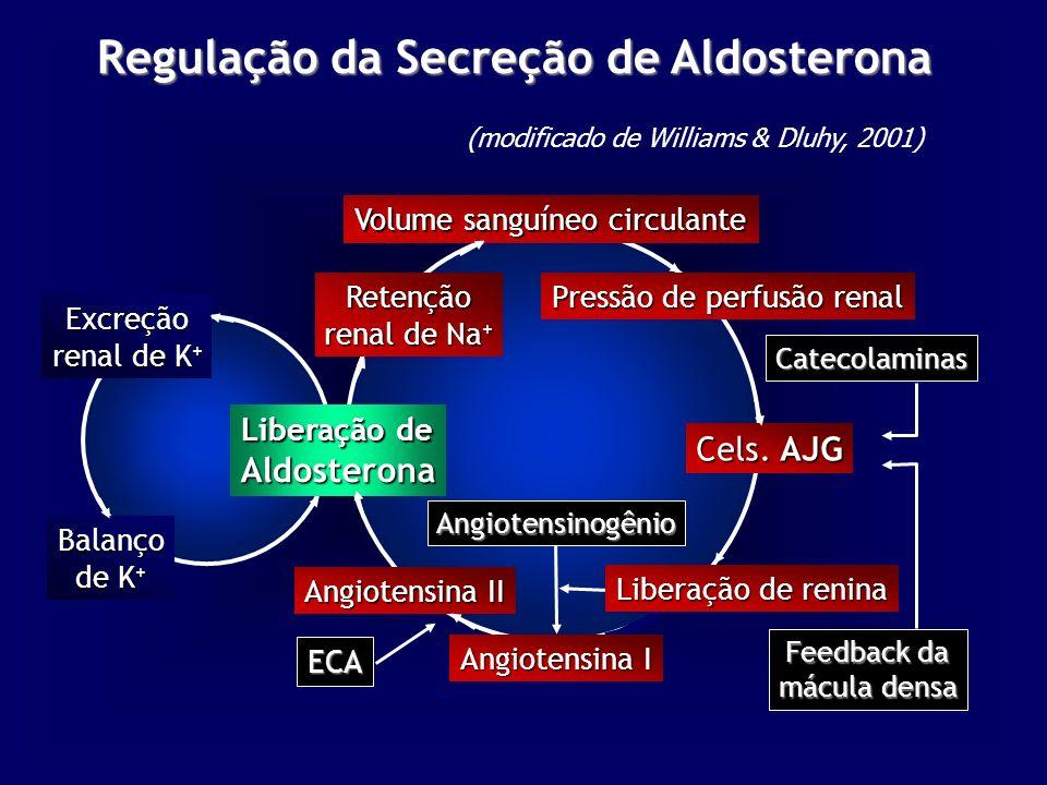 Regulação da Secreção de Aldosterona Liberação de Aldosterona