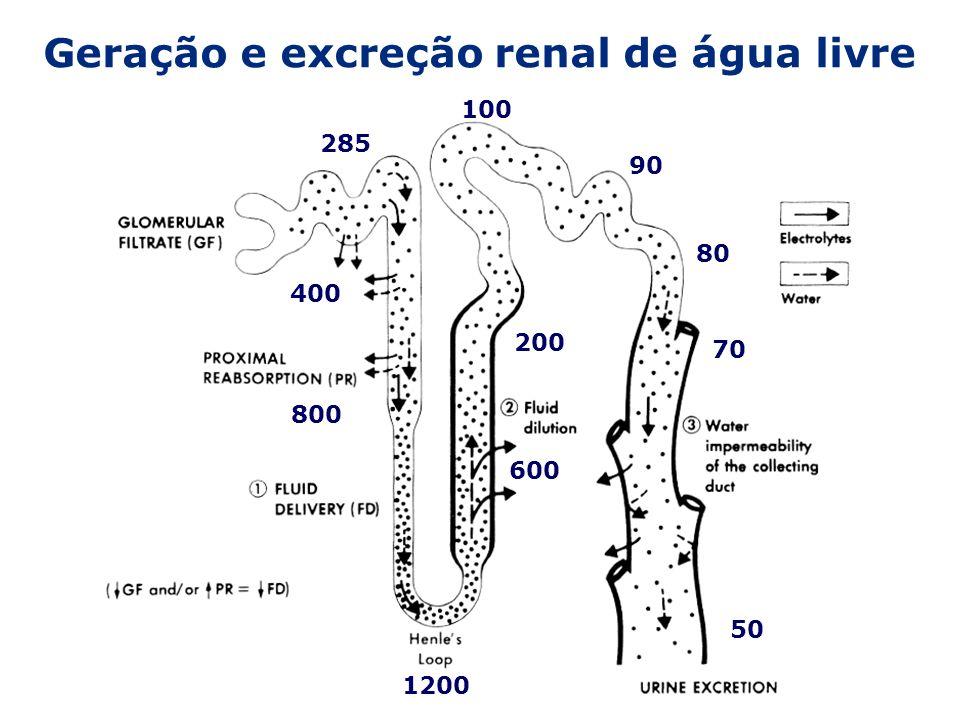 Geração e excreção renal de água livre