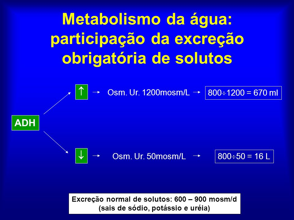 Metabolismo da água: participação da excreção obrigatória de solutos