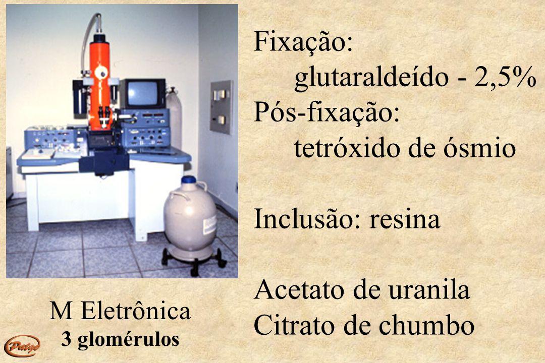 Fixação: glutaraldeído - 2,5% Pós-fixação: tetróxido de ósmio