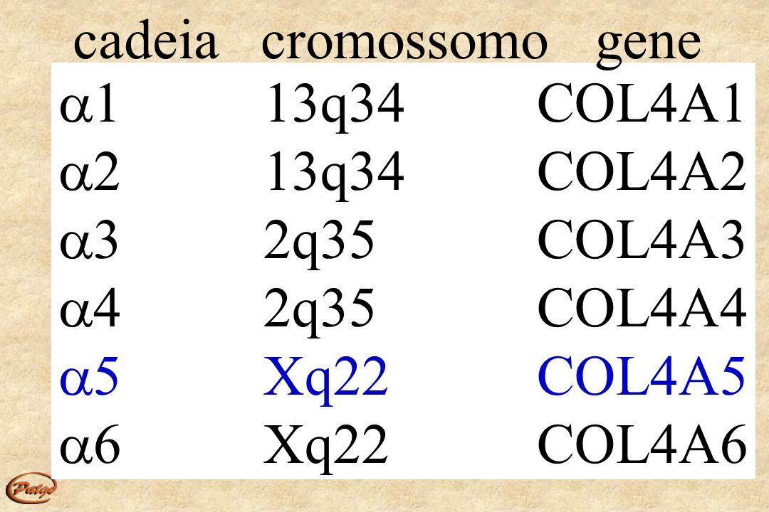 cadeia cromossomo gene