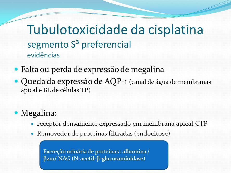 Tubulotoxicidade da cisplatina segmento S³ preferencial evidências