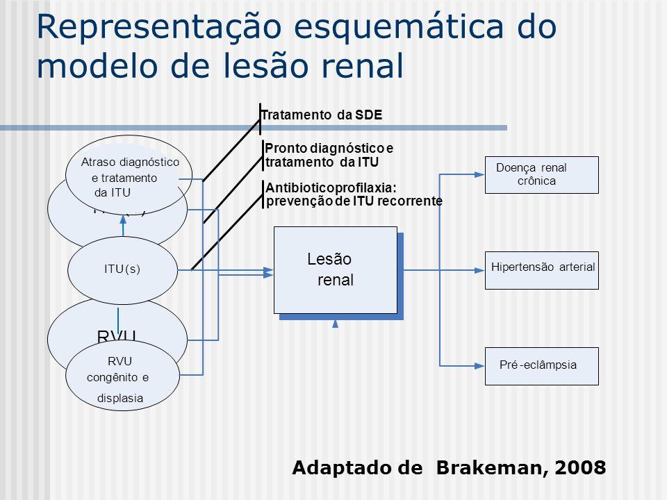 Representação esquemática do modelo de lesão renal