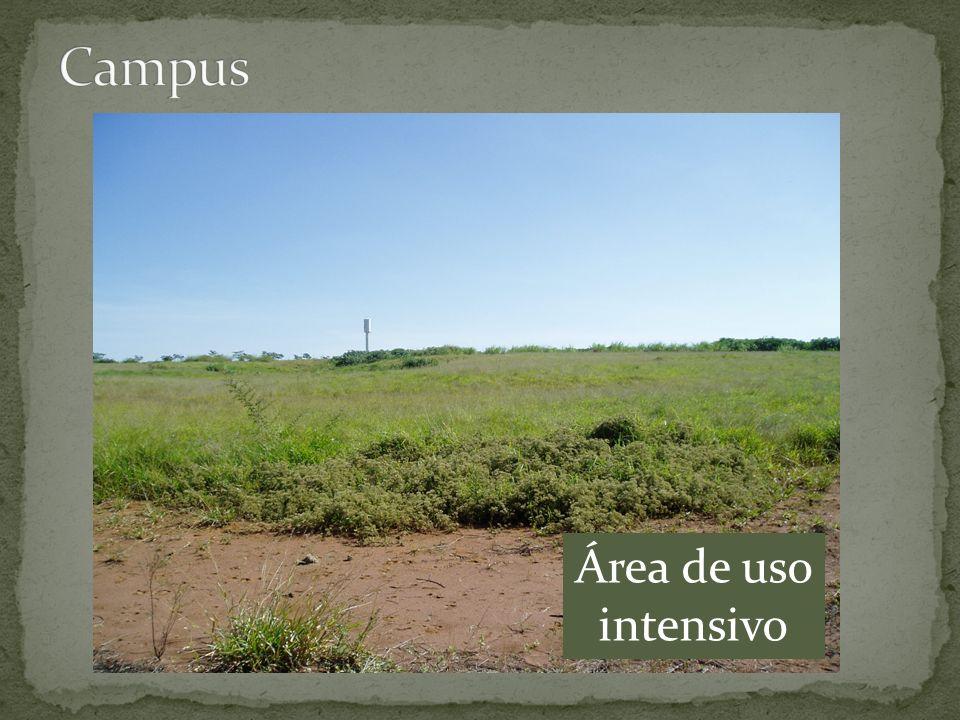Campus Área de uso intensivo