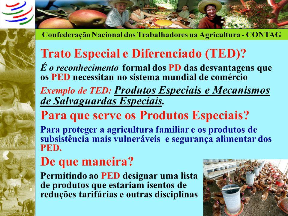 Trato Especial e Diferenciado (TED)