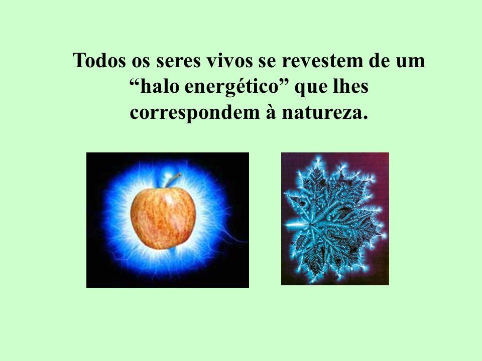 Todos os seres vivos se revestem de um halo energético que lhes correspondem à natureza.