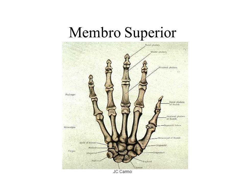 Membro Superior JC Carmo
