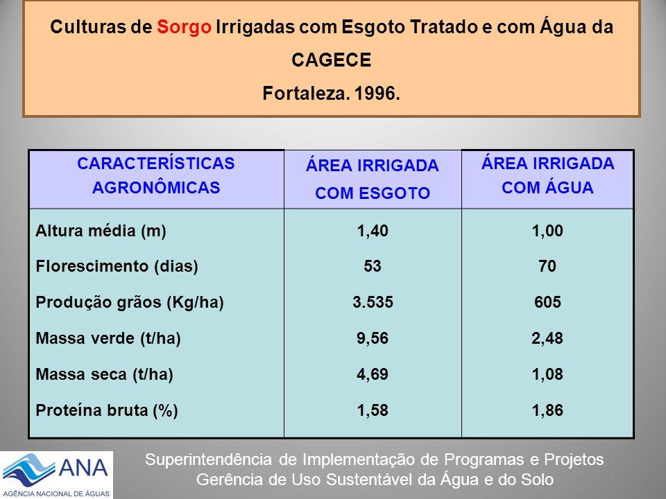 Culturas de Sorgo Irrigadas com Esgoto Tratado e com Água da CAGECE Fortaleza. 1996.