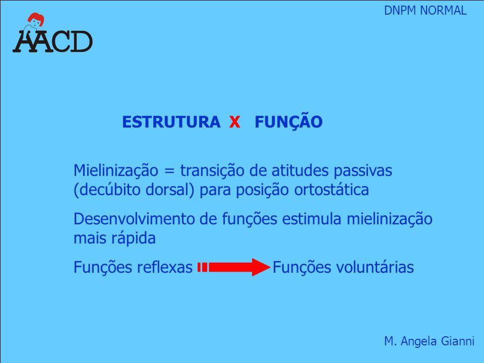 ESTRUTURA X FUNÇÃO Mielinização = transição de atitudes passivas (decúbito dorsal) para posição ortostática.