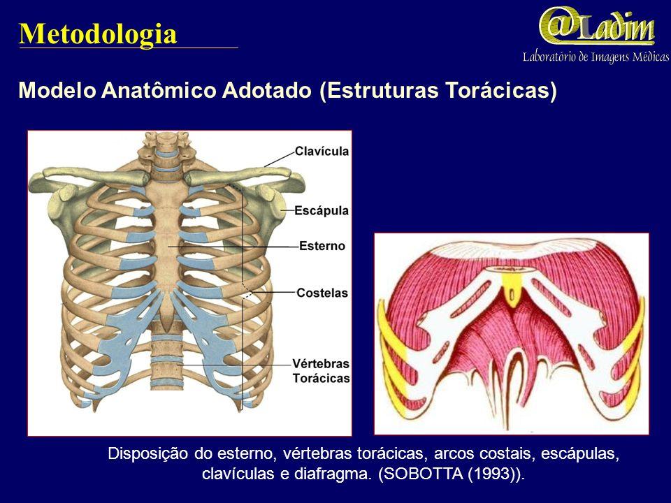 Metodologia Modelo Anatômico Adotado (Estruturas Torácicas)