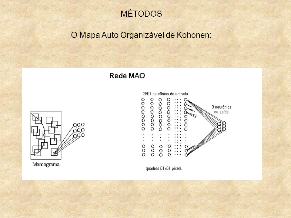 O Mapa Auto Organizável de Kohonen:
