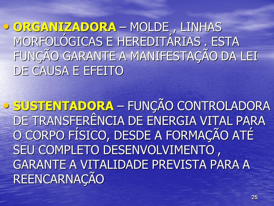 ORGANIZADORA – MOLDE , LINHAS MORFOLÓGICAS E HEREDITÁRIAS