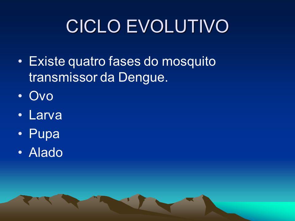 CICLO EVOLUTIVO Existe quatro fases do mosquito transmissor da Dengue.