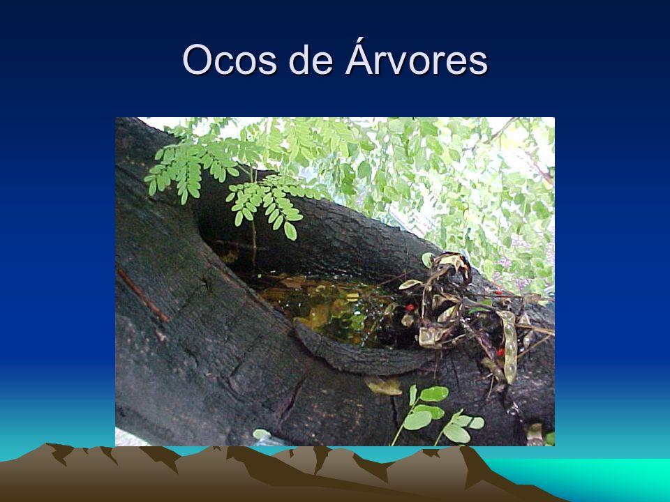Ocos de Árvores