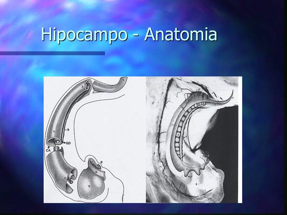 Hipocampo - Anatomia