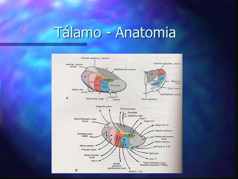 Tálamo - Anatomia