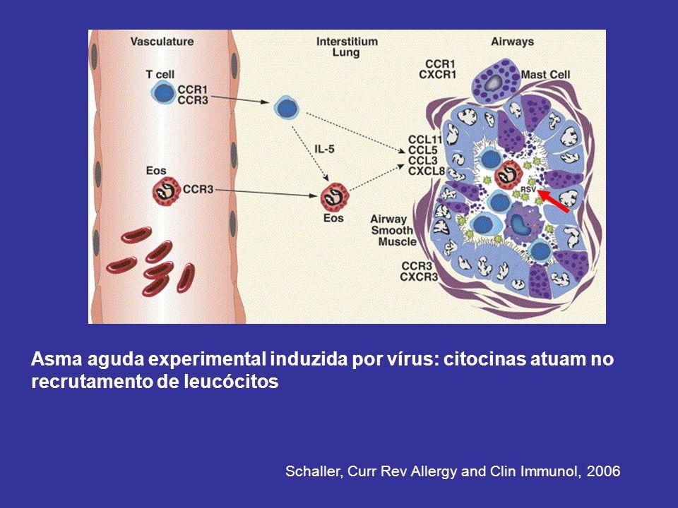 Asma aguda experimental induzida por vírus: citocinas atuam no recrutamento de leucócitos