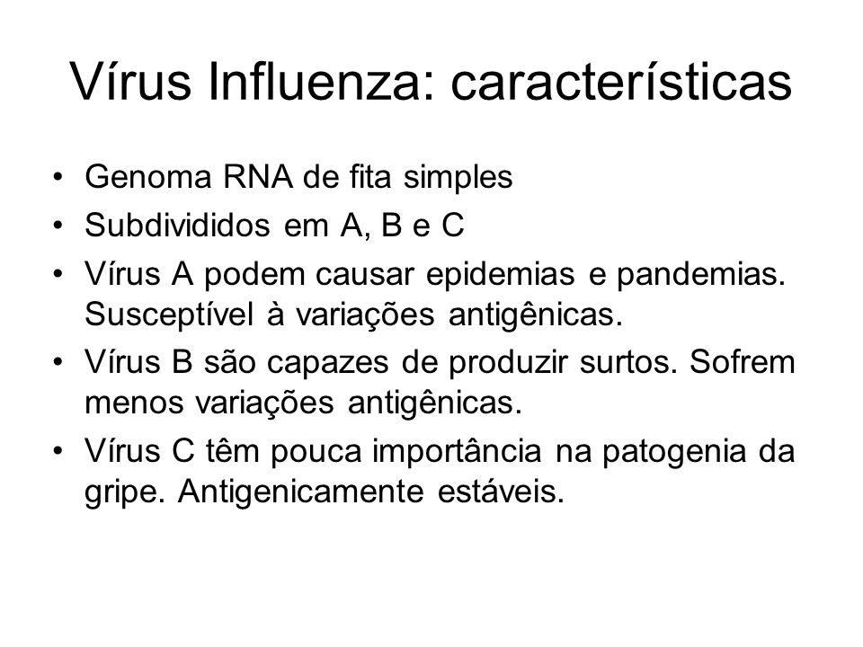 Vírus Influenza: características