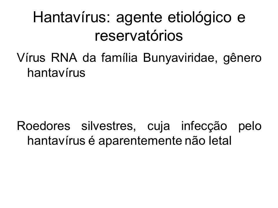 Hantavírus: agente etiológico e reservatórios