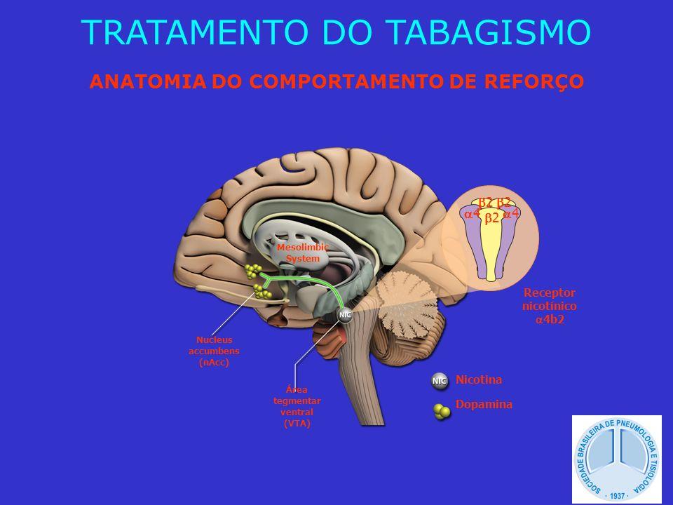 ANATOMIA DO COMPORTAMENTO DE REFORÇO