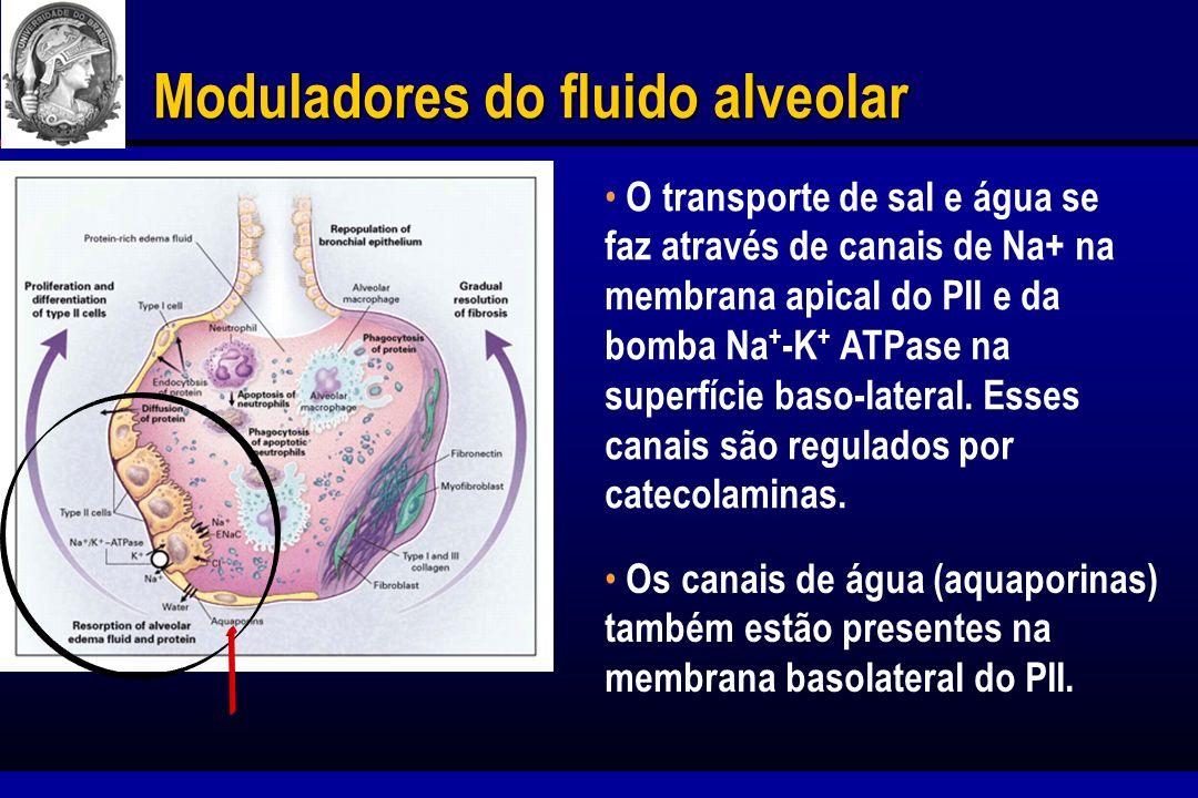 Moduladores do fluido alveolar